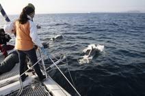 Turismo para disfrutar de aves y delfines en la costa de Asturias