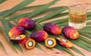 ¿Por qué es tan malo el aceite de palma?