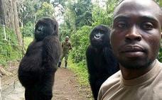 El posado de unos gorilas en un selfie que revoluciona las redes sociales