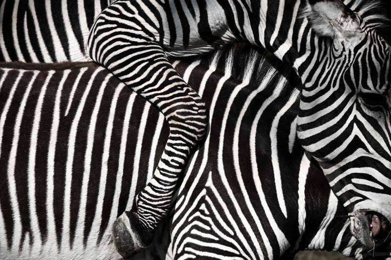 Las singulares imágenes sacadas en un zoo