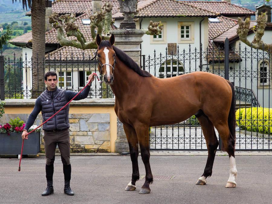 Las yeguadas más 'top' de Asturias