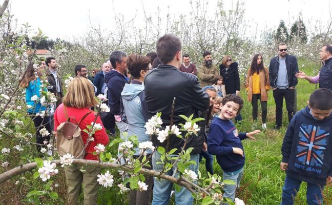 La floración de los manzanos llena la Comarca de la Sidra