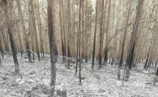 Un apicultor, posible autor del incendio forestal declarado en la sierra de Sollera