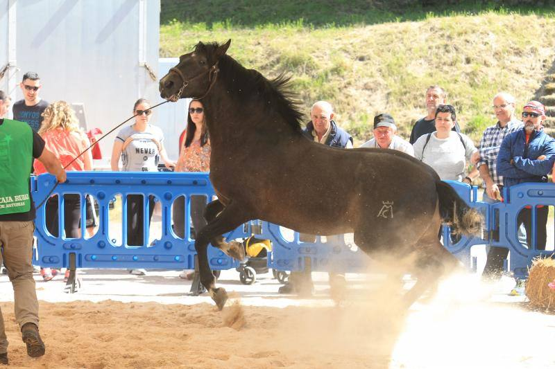 Concurso de caballos en Cangas de Onís