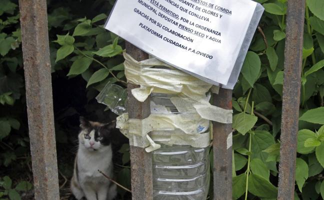 Animalistas piden que no se deje comida para gatos en los chalés de La Vega