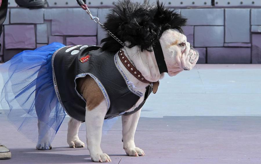 Las imágenes de mascotas disfrazadas que te sacarán una sonrisa