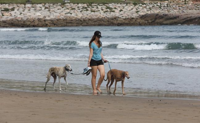 Los perros se rebelan en la playa de Salinas
