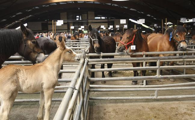 Siero celebra su VII Concurso Regional Equino