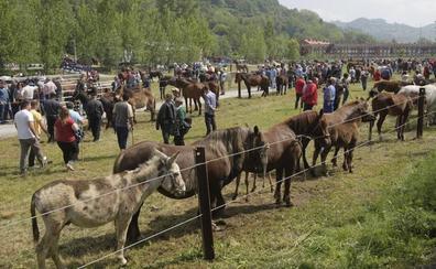 La Feria de La Ascensión de Oviedo reunirá cerca de 150 puestos y ochenta animales de razas autóctonas