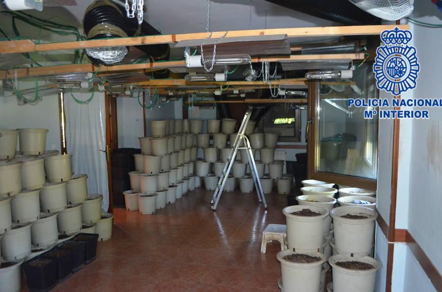 Desmantelada una plantación de marihuana en una vivienda unifamiliar gijonesa