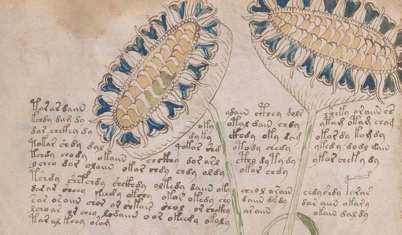 El manuscrito Voynich, ¿por fin descifrado?