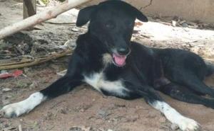 Un perro salva la vida a un bebé enterrado vivo por su madre