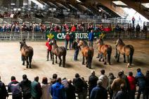 Los mejores caballos de la montaña asturiana