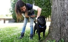 Las cámaras de seguridad captan el abandono de un perro a las puertas del Albergue en Oviedo