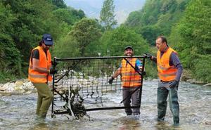 Retiran mil kilos de basura del río Casaño, en Cabrales