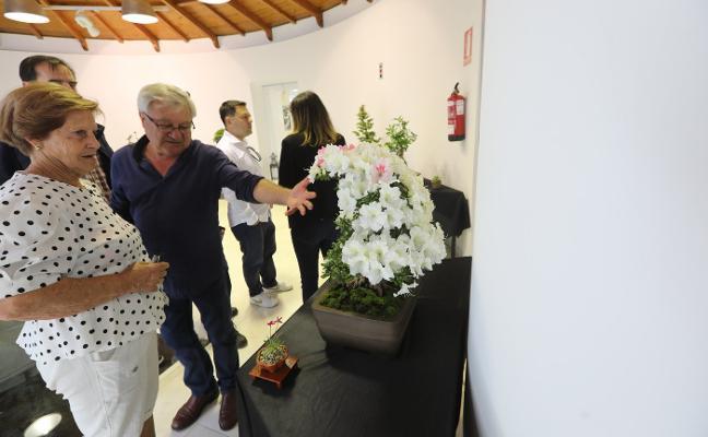 Los secretos del bonsái
