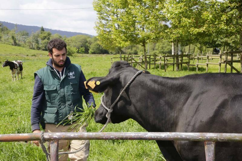 El Instituto de Luces estrenará un grado de ganadería pionero en Asturias