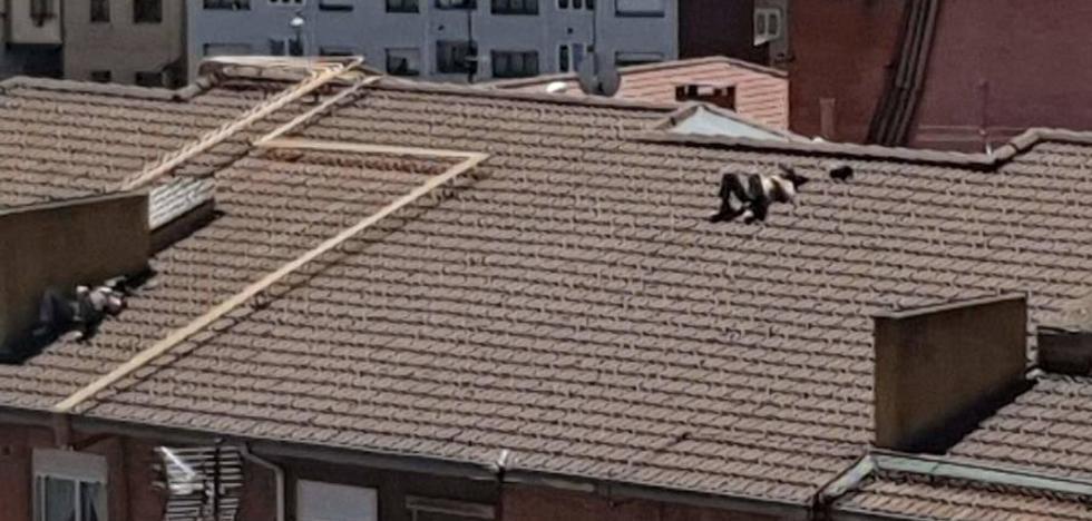Se suben al tejado de un edificio de Oviedo para tomar el sol