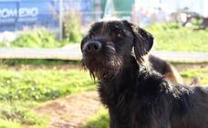 Movilización en redes sociales para encontrar a Tristán, un perro perdido en Oviedo