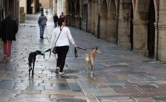 El censo de perros se dispara en Avilés y suma cinco altas al día en lo que va de año