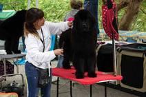 Los mejores perros del país desfilan en el Concurso de Parres