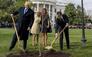 El árbol plantado por Trump y Macron en señal de amistad acaba muriendo