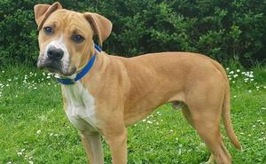 Los 'amigos' no se compran: 20 perros de Asturias que buscan familia
