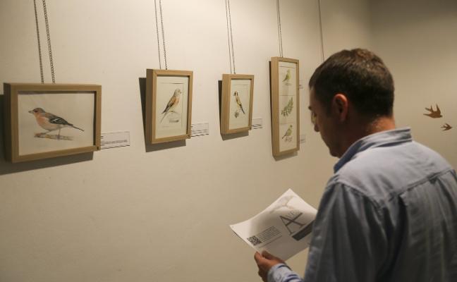 Isabel Fernández expone sus dibujos de 41 aves en la Casa de Cultura de Nava