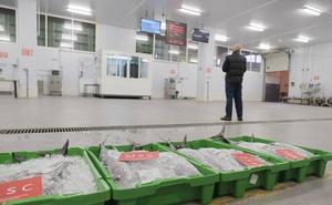 El primer bonito de Gijón, a 12,01 euros el kilo del grande