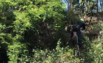 La escalada de la Guardia Civil para rescatar a una cabra atrapada en un talud en Arriondas