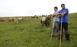 La carne, de Asturias