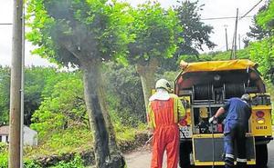 Arde parte de un árbol en la carretera a Pancar