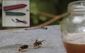 Asturias se prepara para combatir la avispa asiática con explosivos