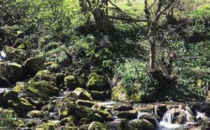 Foces del Pino y río Aller