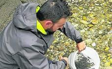 La asociación El Esmerillón repuebla el Río Cares