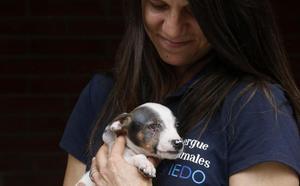 El cachorro 'Edu', «un superviviente» en busca de hogar