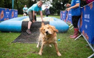 Metrópoli celebra el sábado el día del perro