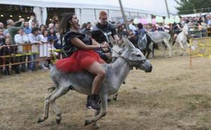 La carrera de burros de las fiestas de Collao se celebra a pesar de la polémica