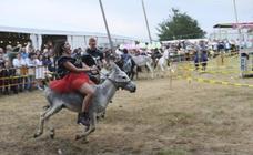 Carrera de burros con polémica en Collao