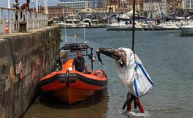 Rescatan el cadáver de un delfín en el Puerto Deportivo de Gijón