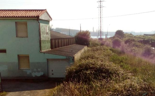 La abundante maleza invade propiedades privadas en Zeluán