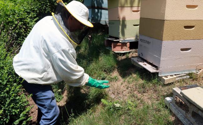«Necesitamos saber qué está matando a nuestras abejas»