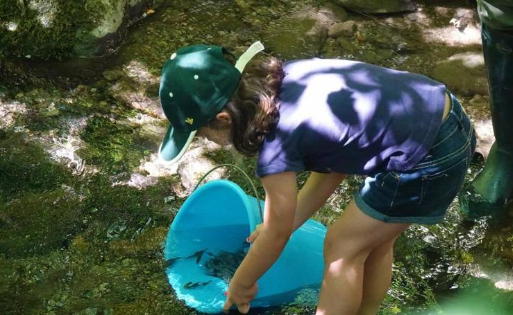Suelta de alevines de salmón y trucha en el Rio Ponga