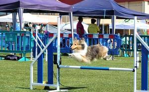La élite canina se reúne en Cangas