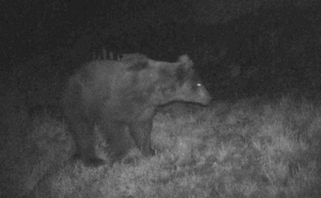 «La gente se tiene que acostumbrar al aumento de la población del oso»