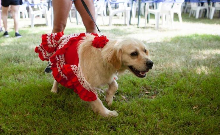 Desfile canino en Somió