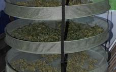 Desmantelada una plantación de marihuana en una vivienda en Quirós