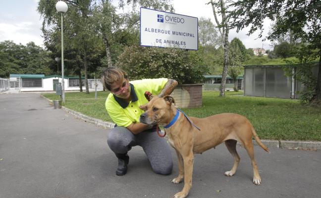 La perrera recibe 40 animales al mes en verano