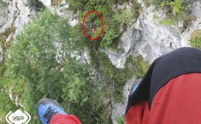 Rescatan a un montañero que se despeñó treinta metros en la ruta del Cares y pasó tres horas colgado de un árbol