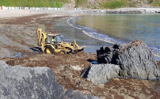 Los concejos costeros reclaman ayudas para retirar el ocle de sus arenales